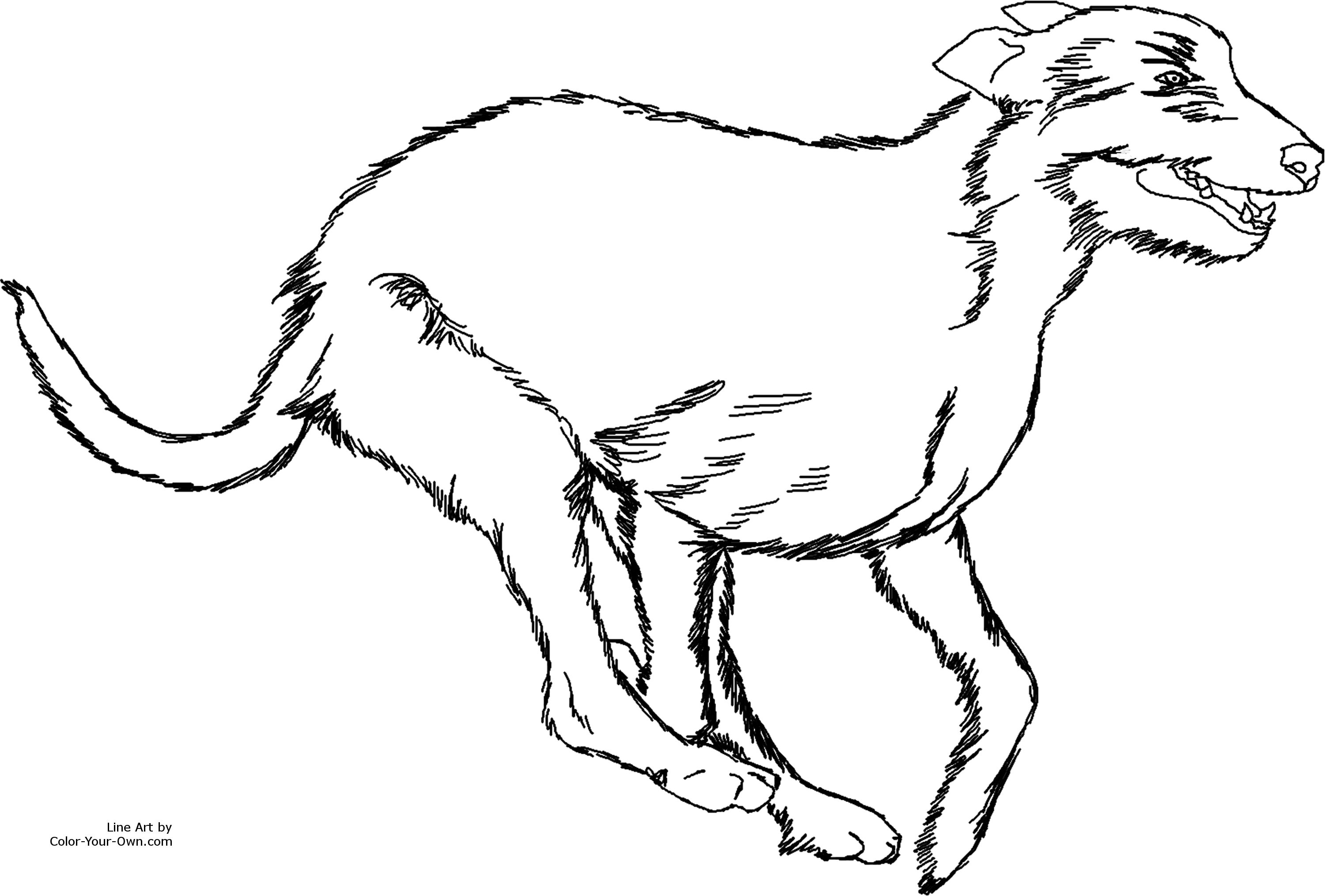 Simple Running Irish Wolfhound Line Art Running Irish