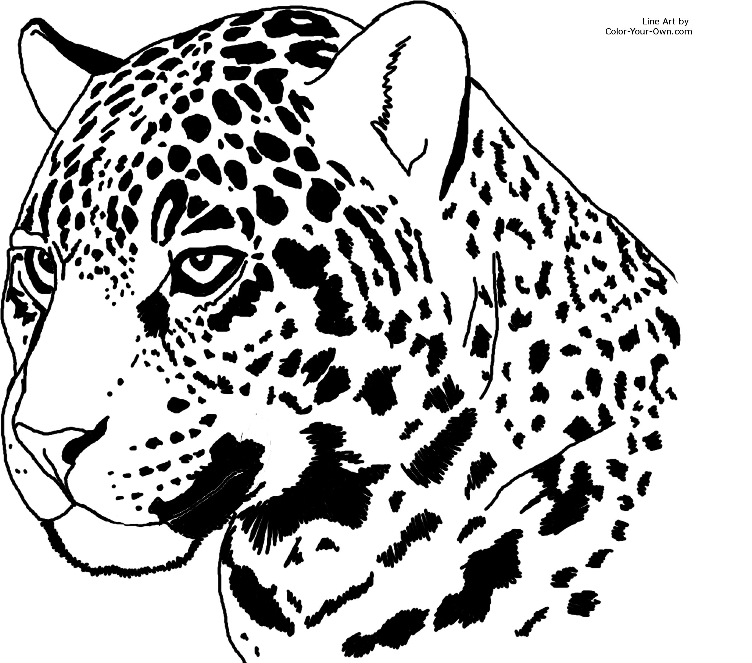 coloring pages jaguars - photo#31