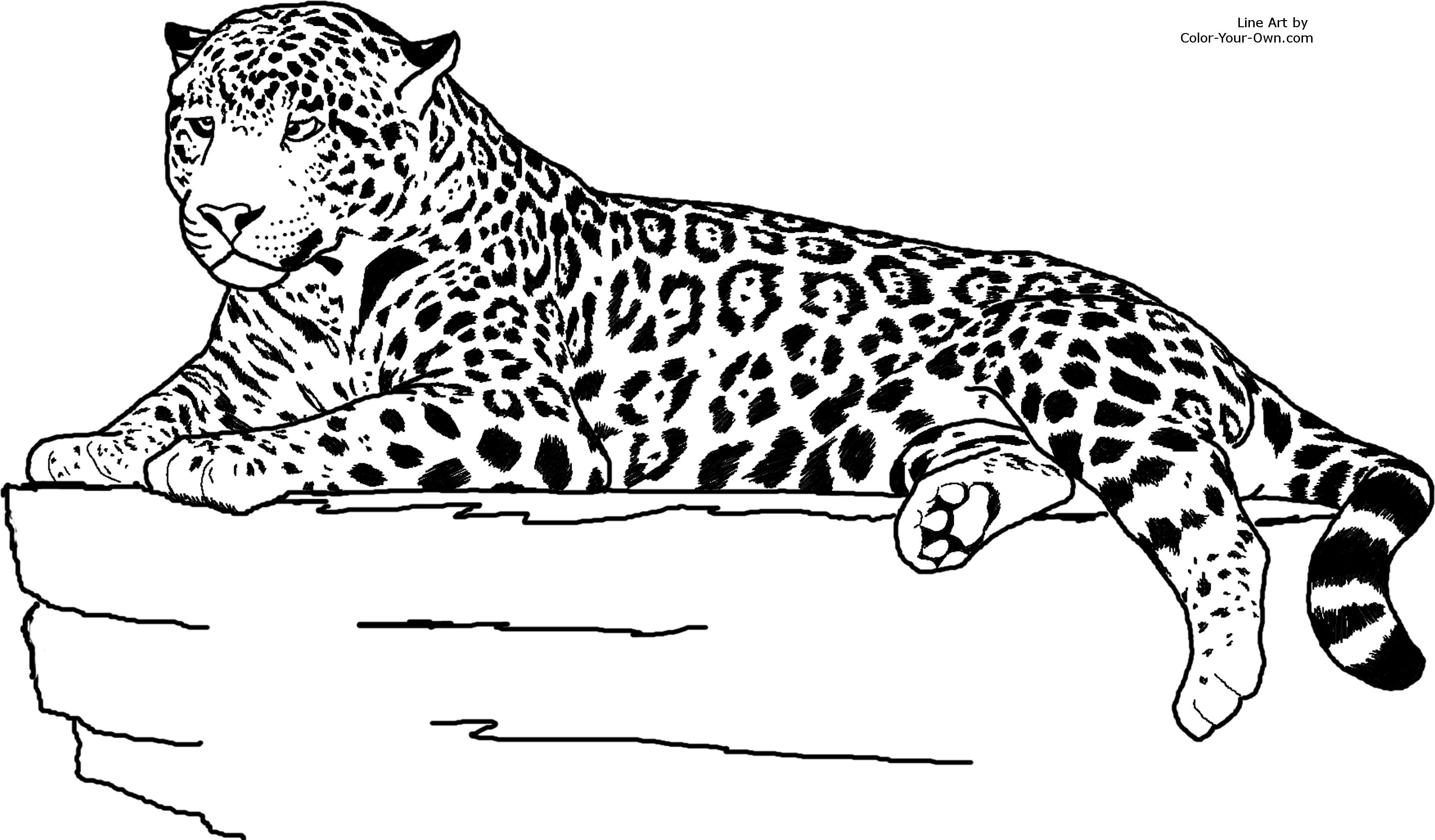 jaguar coloring page - jaguar head coloring pages