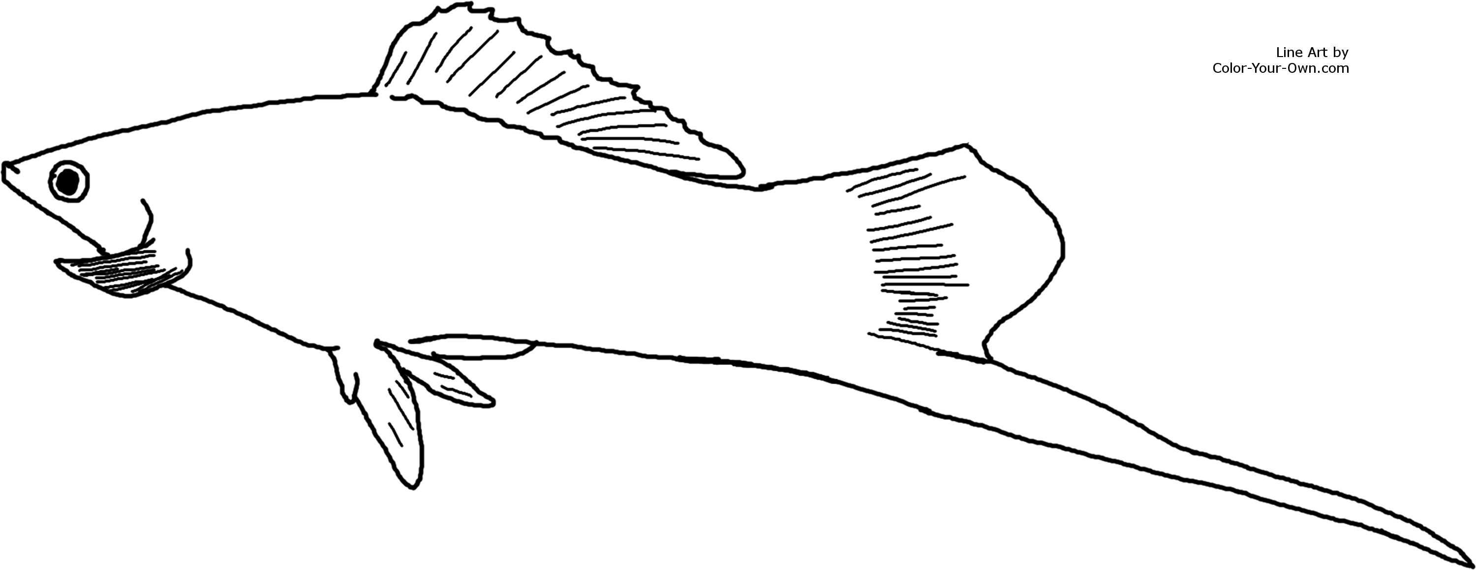 aquarium fish male swordtail coloring page