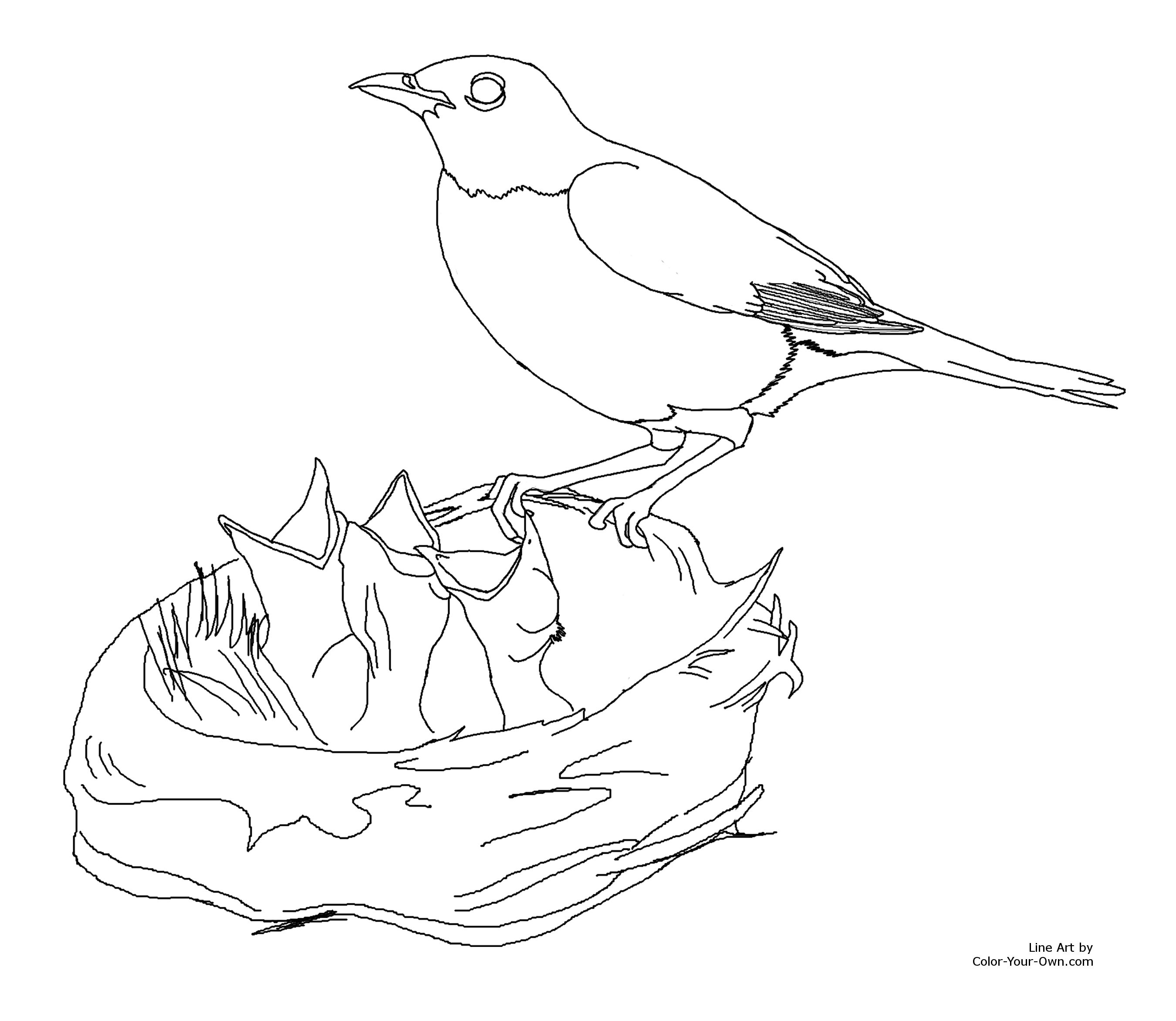 robin feeding baby birds coloring page