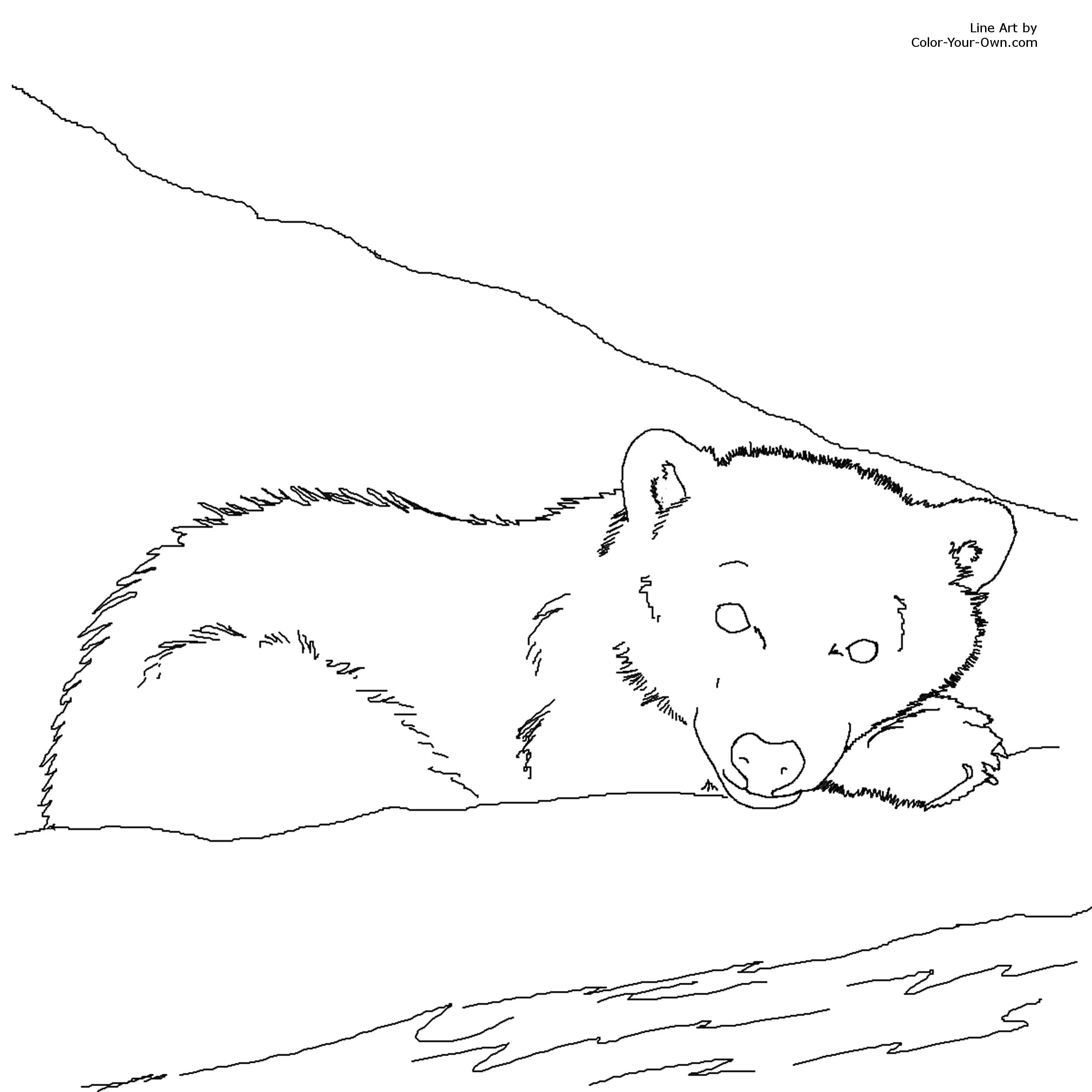 free coloring pages of mother and polar bear cub