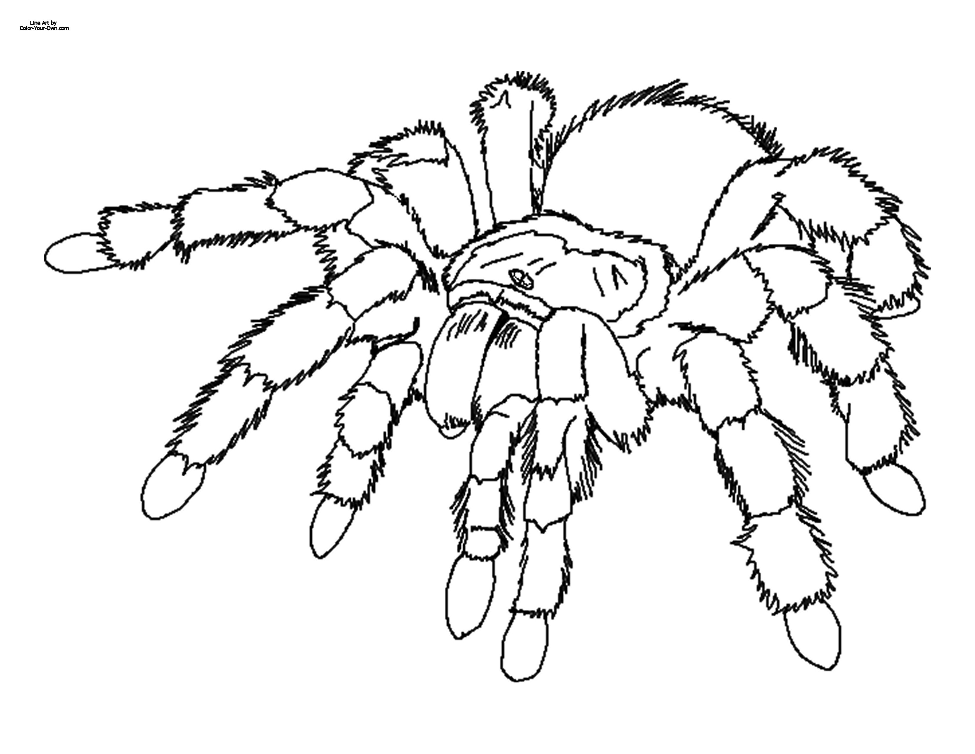 Spider Outline for Pinterest