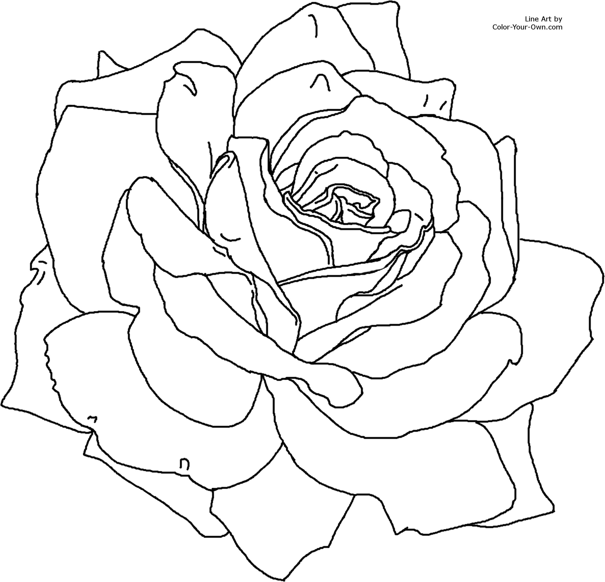 Free Coloring Pages Of Line Drawings Of Roses Roses Colouring Pages