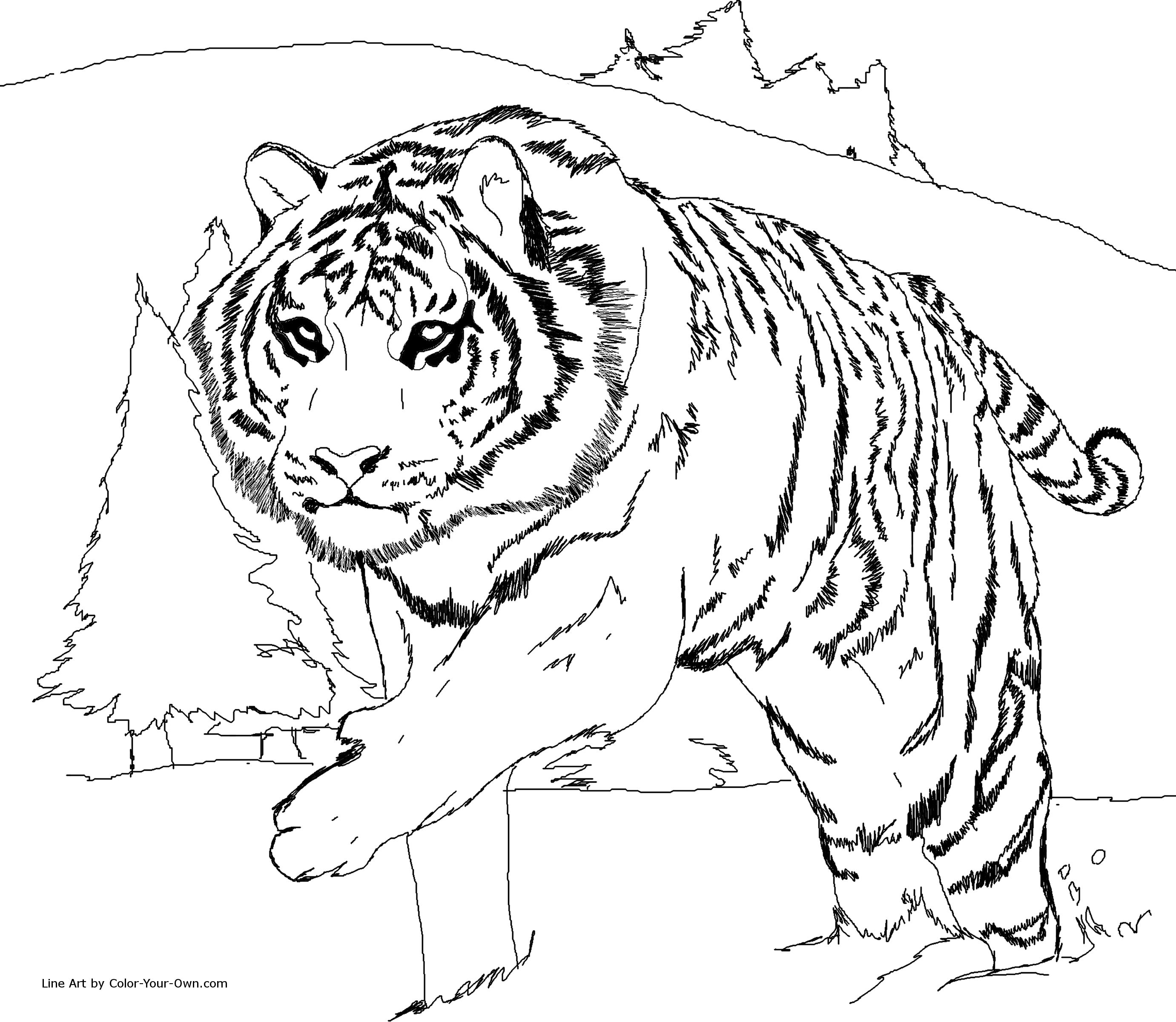 liger coloring pages - photo #26