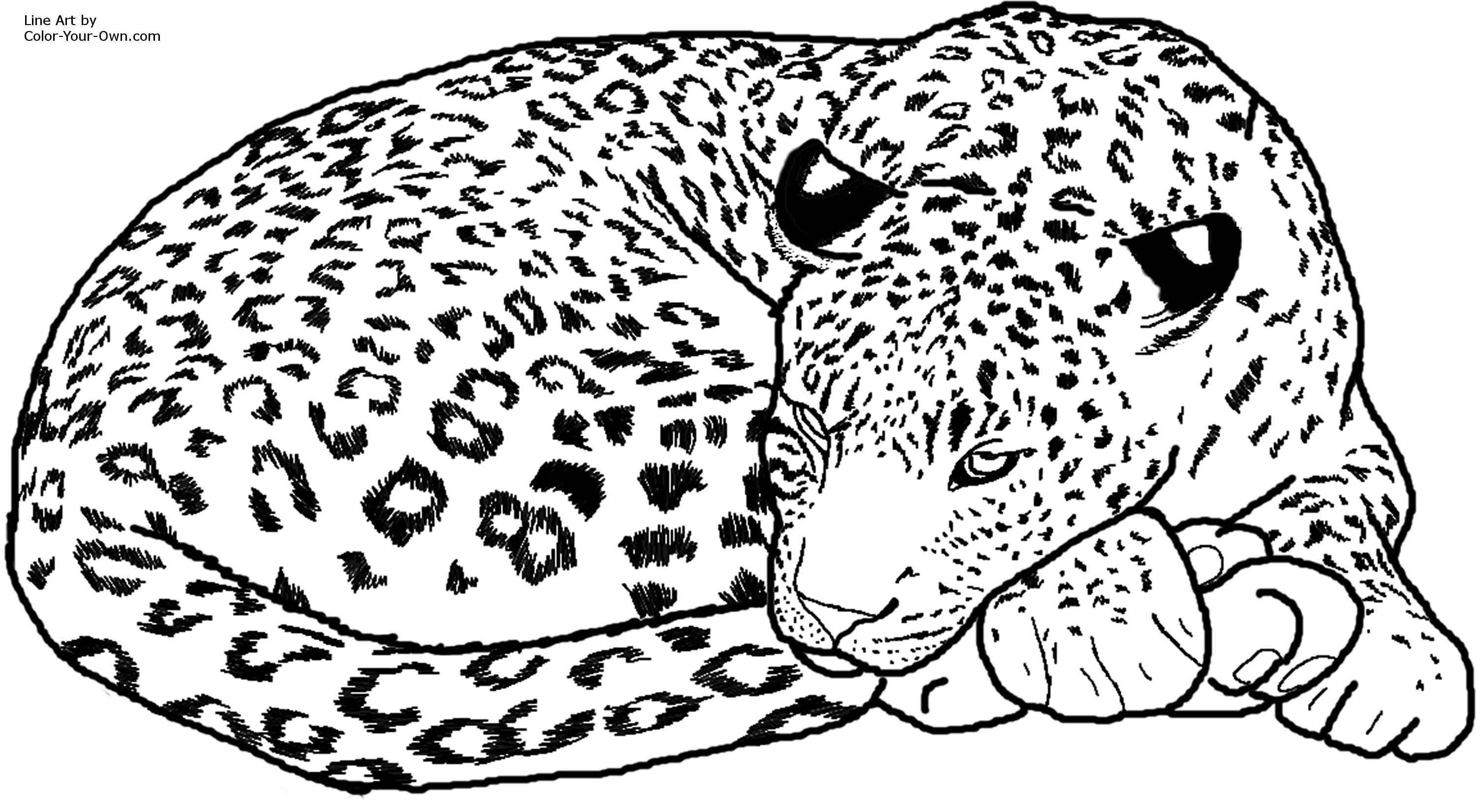 sleepyhead leopard coloring page