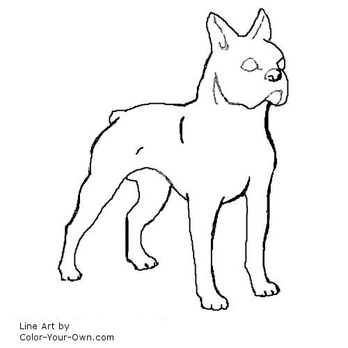 Boston Terrier Dog Coloring Page