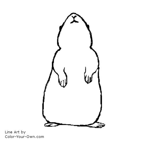 GUINEA PIG coloring pages - 9 free Pets and animals coloring pages ... | 500x500