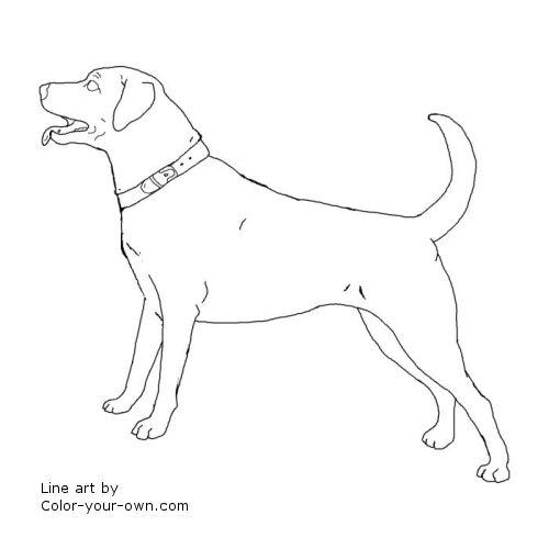 Dog - Labrador Retriever Coloring Page