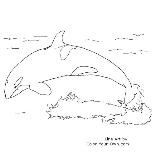 Whale Coloring Pages - GetColoringPages.com   500x500