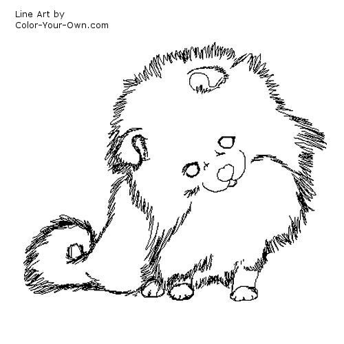 Pomeranian puppy Coloring Page