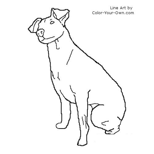 coloring pages of rat terriers - photo#1