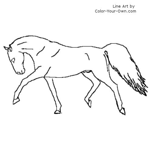 Warmblood Stallion Shows Off Coloring Page